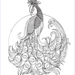 Peacock Coloring Awesome Collection Lostbumblebee Grown Up Colouring Peacock