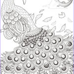 Peacock Coloring Beautiful Images Peacock Coloring Pages Coloring Page