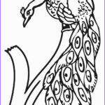 Peacock Coloring Beautiful Photos Printable Peacock Coloring Pages For Kids