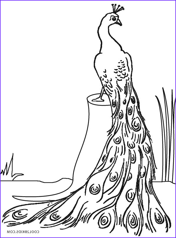 Peacock Coloring Book Awesome Images Printable Peacock Coloring Pages for Kids