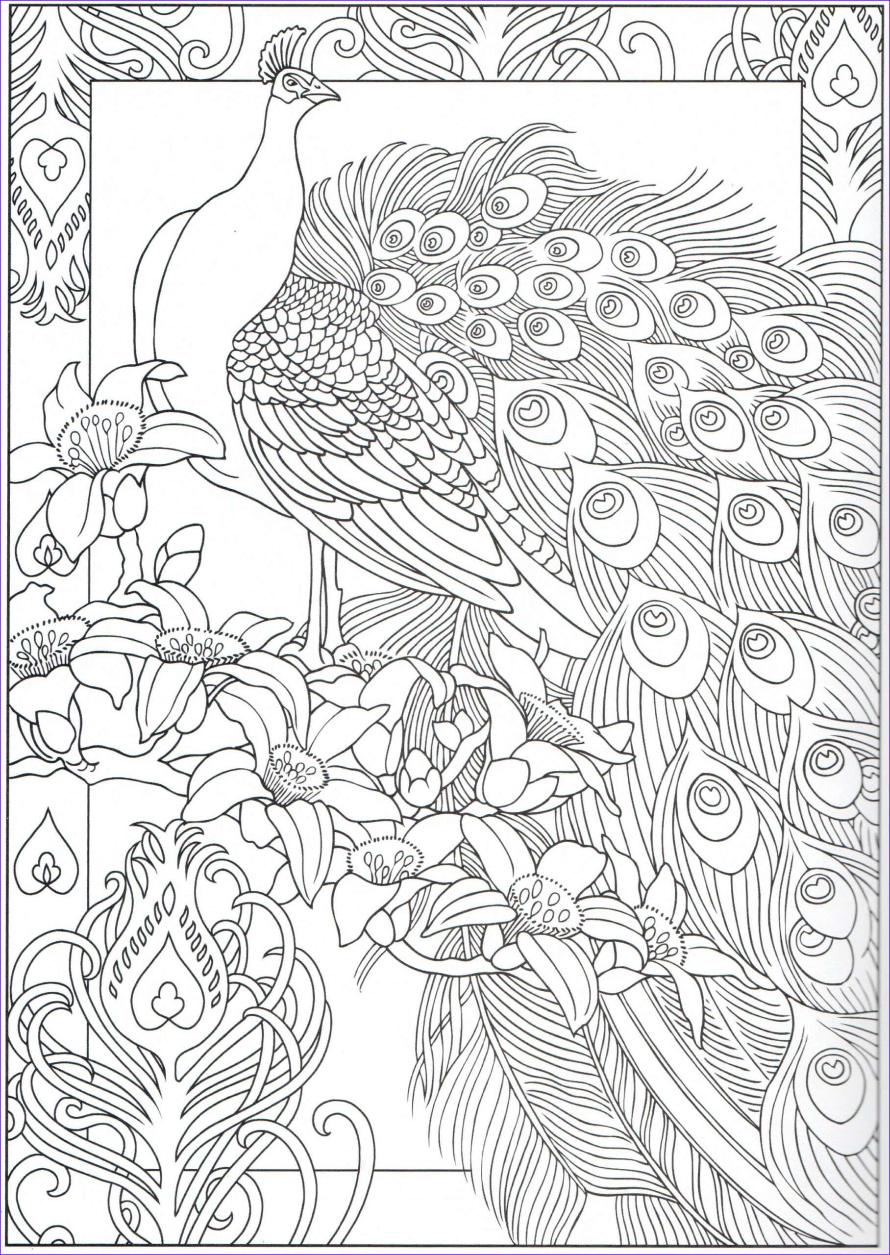 Peacock Coloring Book Best Of Gallery Peacock Coloring Page 29 31