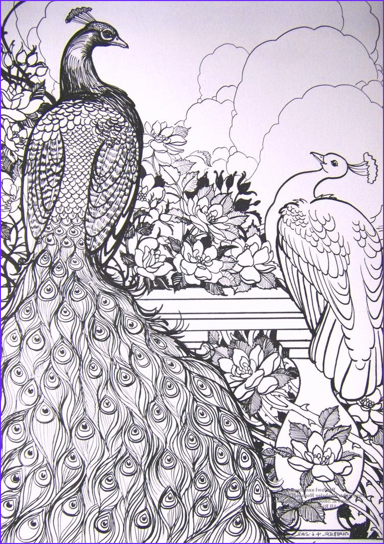 beautiful peacocks coloring pages