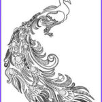 Peacock Coloring Book Cool Stock The Coolest Free Coloring Pages For Adults