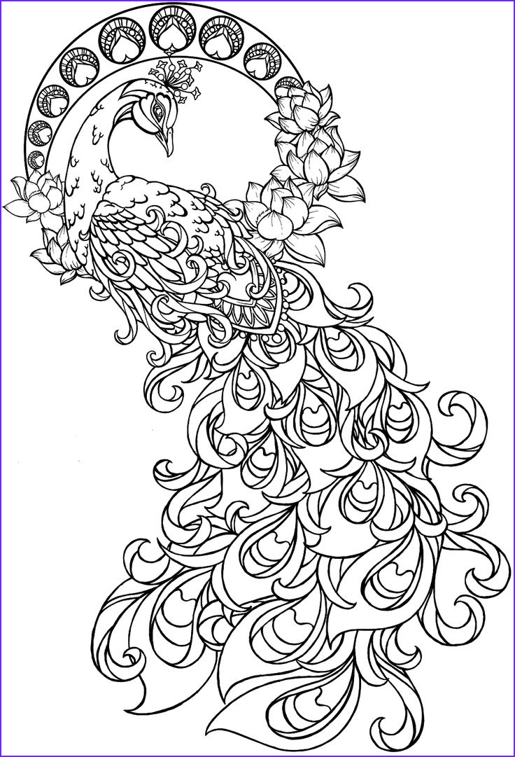 Peacock Coloring Book New Photos 17 Best Images About Peacock On Pinterest