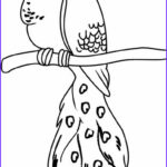 Peacock Coloring Book Unique Photos Printable Peacock Coloring Pages For Kids