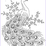 Peacock Coloring Cool Photos Birds Coloring Pages To Knowing The Kind Of Birds Name
