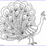 Peacock Coloring Cool Stock Printable Peacock Coloring Pages For Kids