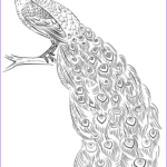 Peacock Coloring Inspirational Collection Peacock Coloring Page