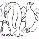 Penguin Coloring Sheet Cool Stock Penguins Coloring Pages To And Print For Free