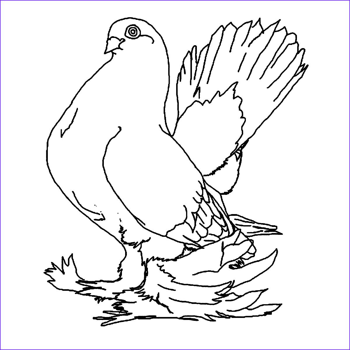 Photos Into Coloring Pages Awesome Photography Free Printable Pigeon Coloring Pages for Kids