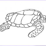 Pictures To Coloring Pages Best Of Stock Free Printable Turtle Coloring Pages For Kids