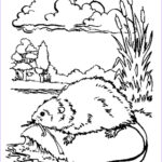 Pictures To Coloring Pages Luxury Images Muskrat Coloring Pages Download Coloring For Kids 2019