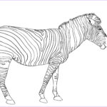 Pictures To Coloring Pages New Image Free Printable Zebra Coloring Pages For Kids