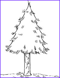 realistic pine tree page sketch templates