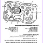 Plant And Animal Cell Coloring Worksheets Awesome Stock Plant And Animal Cell Coloring With Analysis Questions