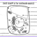 Plant And Animal Cell Coloring Worksheets Awesome Stock Plant Cell Diagram Worksheet