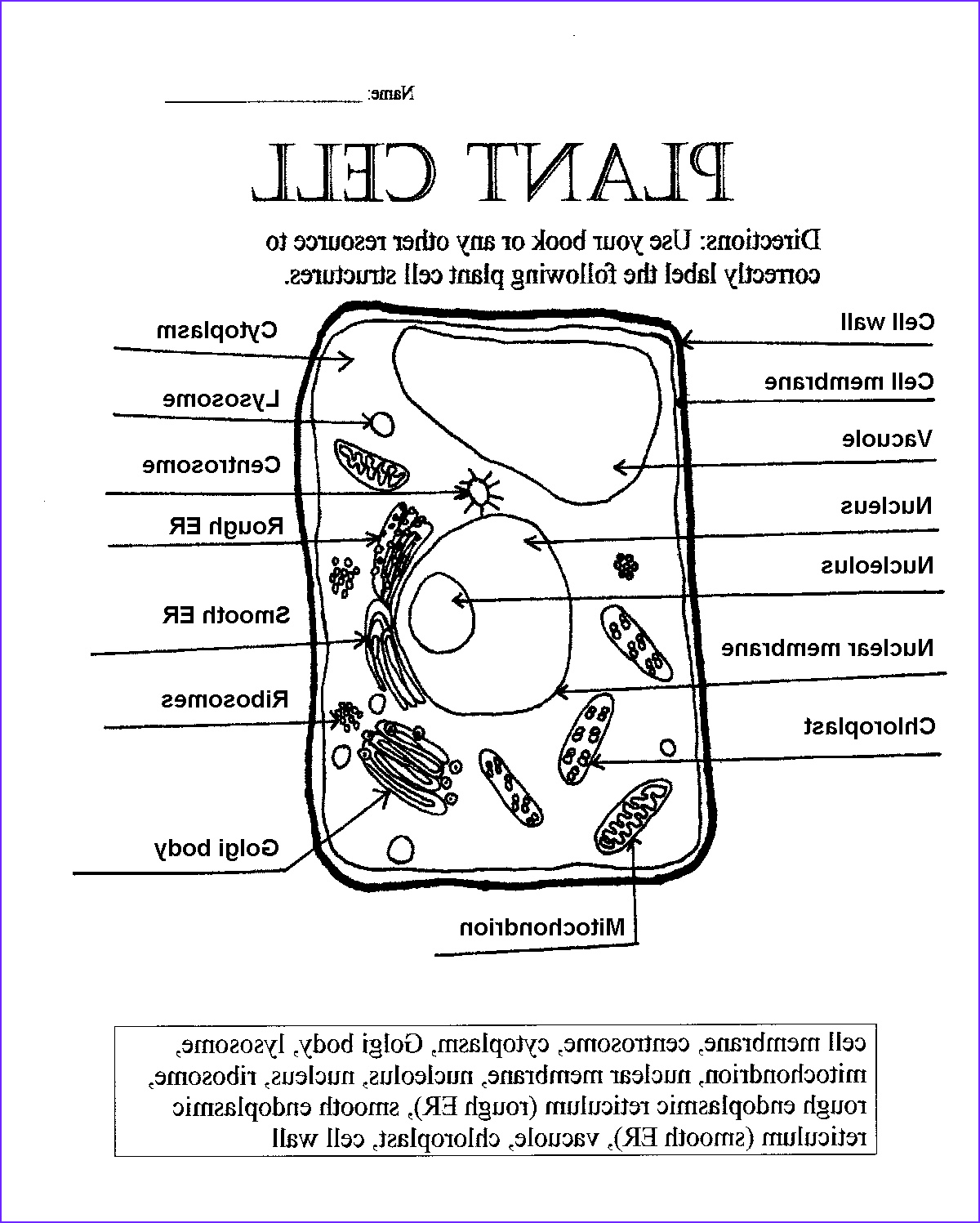 Plant and Animal Cell Coloring Worksheets Best Of Collection Plant Cell Parts Worksheet with Word Bank