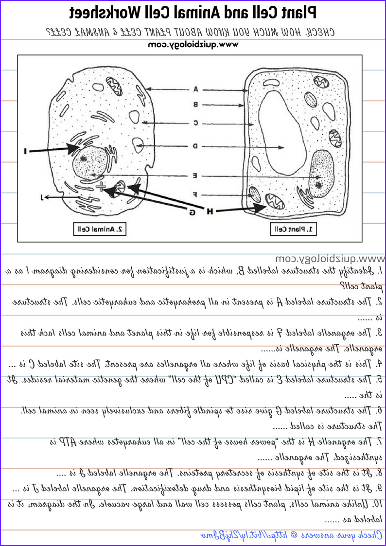 plant cell and animal cell diagram