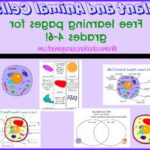 Plant And Animal Cell Coloring Worksheets Cool Gallery Animal Cell Coloring Diagram