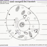 Plant And Animal Cell Coloring Worksheets Cool Photos Animal Cell Coloring Pages Animal Cell Diagram Quiz Free