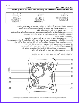 Plant Cell Color Page Worksheet and Quiz Ce 2
