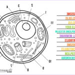 Plant And Animal Cell Coloring Worksheets Inspirational Images Third Cycle D'octubre 2015