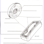Plant And Animal Cell Coloring Worksheets Inspirational Photography Pin By Paul Stalenhoef On Education