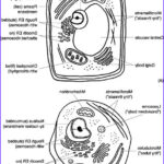 """Plant And Animal Cell Coloring Worksheets New Stock Cells The """"little Chambers"""" In Plants And Animals Normal"""