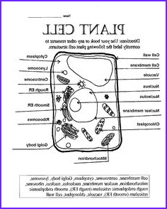 Plant Cell Coloring Answers Inspirational Photos Plant Cell Coloring Diagram Worksheet Answers