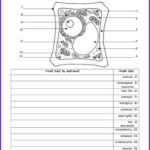 Plant Cell Coloring Answers Luxury Stock Plant Cell Color Page Worksheet And Quiz Ce 2 By