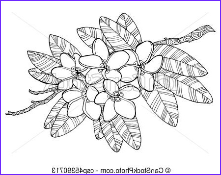 Plumeria Coloring Awesome Photos Plumeria Flowers Coloring Book Vector Illustration Tattoo