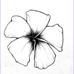Plumeria Coloring Awesome Stock Plumeria Free Coloring Pages