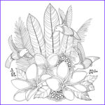 Plumeria Coloring Beautiful Collection Vector Flying Hummingbird Plumeria Flower And Palm Leaf In