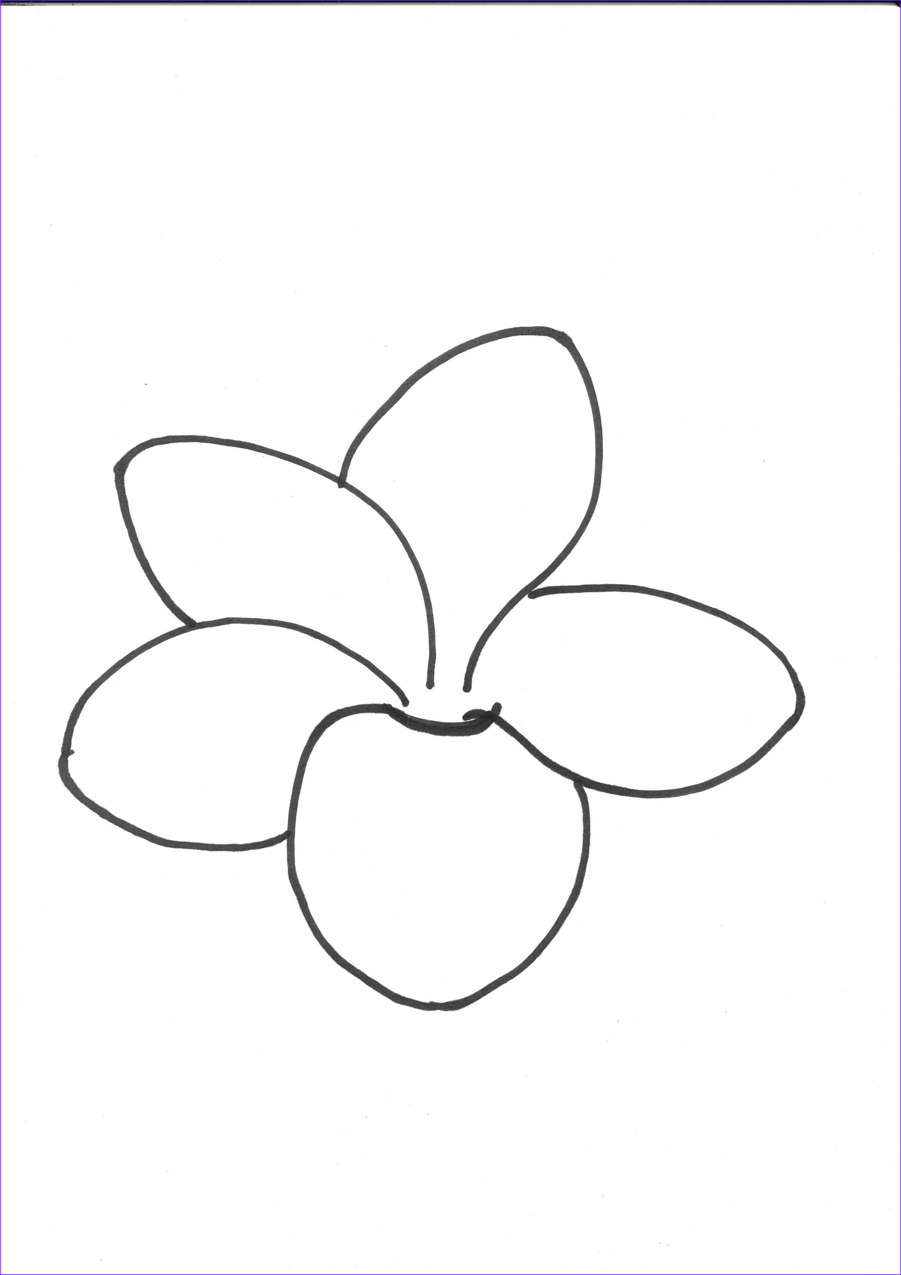 Plumeria Coloring Cool Collection Frangipani Coloring Download Frangipani Coloring