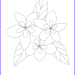 Plumeria Coloring Inspirational Gallery Plumeria Coloring Page Wwwimgarcade Line Image Sketch