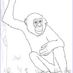 Popular Coloring Inspirational Image Free Printable Chimpanzee Coloring Pages for Kids
