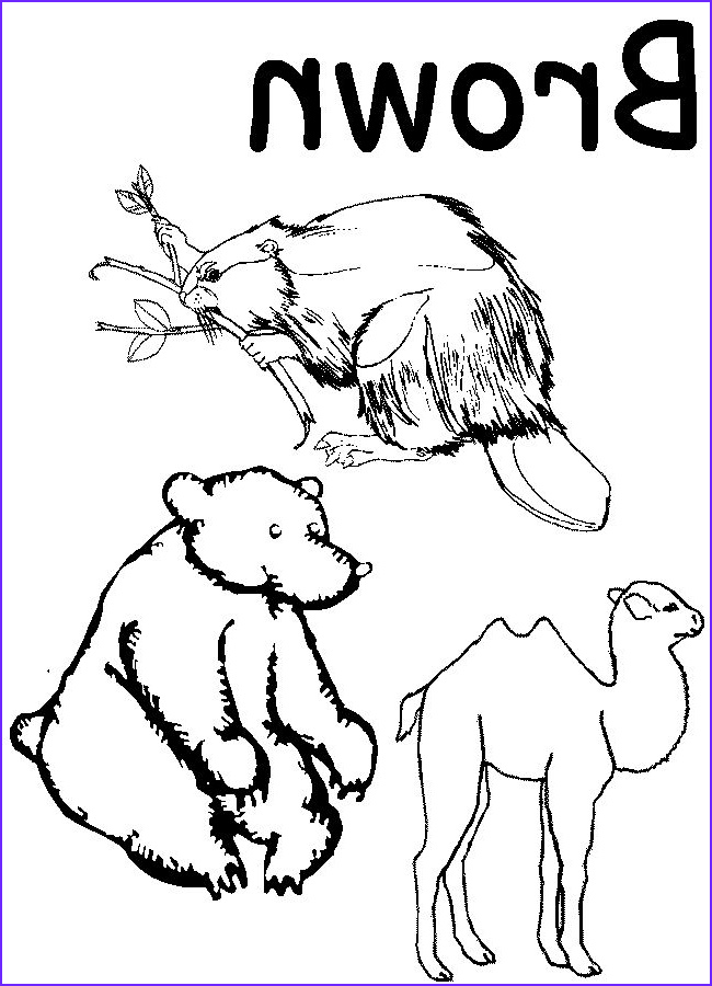 Preschool Coloring Worksheets New Photos Colors Coloring Pages for Preschool Google Search