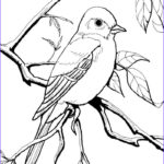 Printable Bird Coloring Pages Awesome Images Coloring Sheets For Burgess Chapters