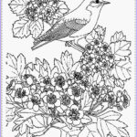 Printable Bird Coloring Pages Cool Stock Bird Coloring Pages Realistic