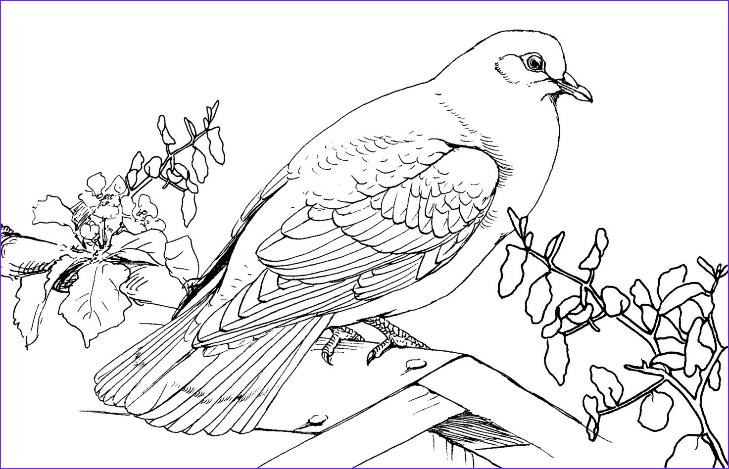 Printable Coloring Books Best Of Collection Free Printable Pigeon Coloring Pages for Kids