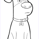 Printable Coloring Cool Photography Pets Coloring Pages Best Coloring Pages For Kids