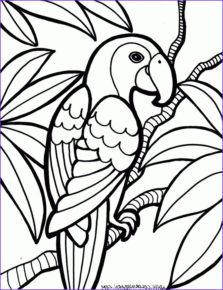 Printable Coloring Page Cool Collection Parrot Coloring Pages Cinderella