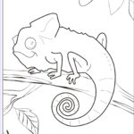Printable Coloring Pages Beautiful Photos Chameleon Coloring Pages To Printable