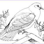Printable Coloring Pages Elegant Collection Free Printable Pigeon Coloring Pages For Kids