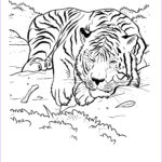 Printable Coloring Pages Elegant Collection Free Printable Tiger Coloring Pages For Kids