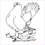 Printable Coloring Pages Inspirational Stock Free Printable Pigeon Coloring Pages For Kids