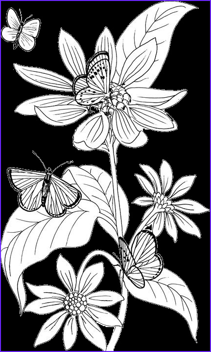 butterfly coloring page17
