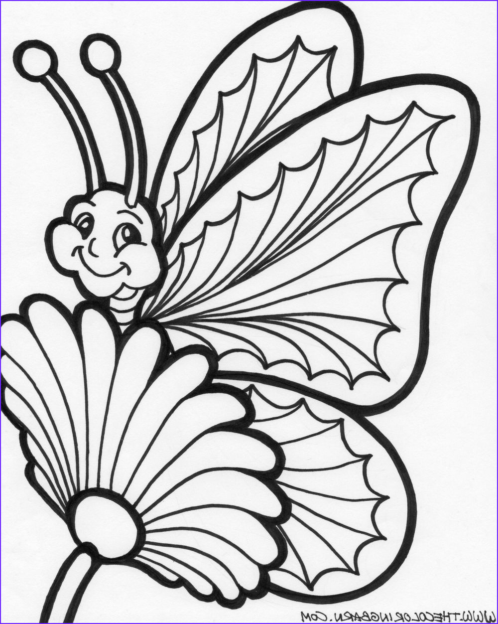 realistic butterfly