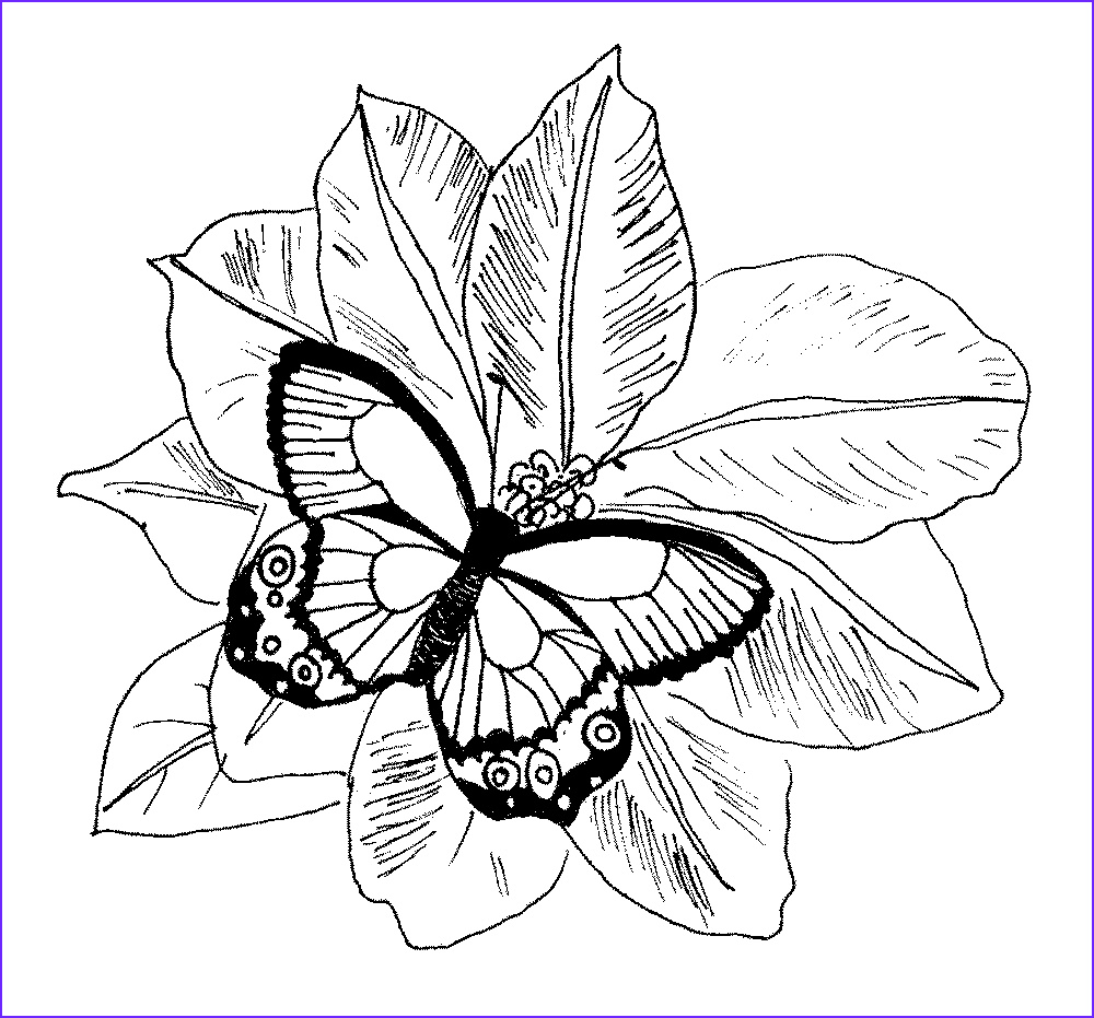 Printable Coloring Pages Of Flowers and butterflies New Stock Coloring Pages Flowers Coloring Pages butterfly and