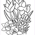 Printable Flower Coloring Pages Beautiful Gallery Rose Flower Coloring Page 29 Flowers Coloring Pages